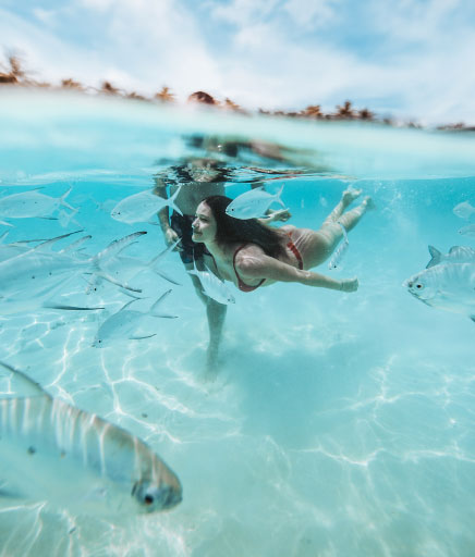 couple swimming with fish in the ocean