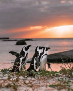 penguins on the shore